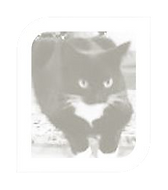 cat-newsletter.png