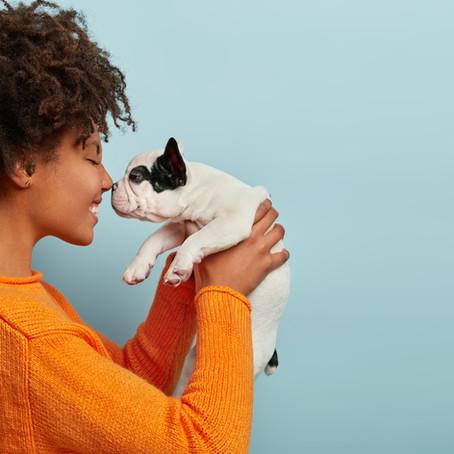 O que ensinar ao seu cachorro nos primeiros meses de vida?