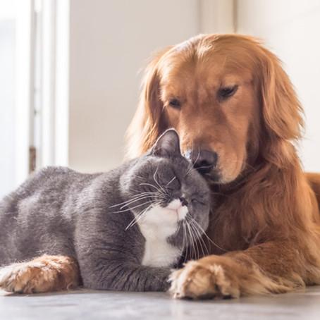 Cachorro e gato: adaptação e convivência