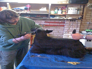 Lee grooming Calan