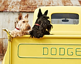 Cridhe and Connie in Dodge pickup