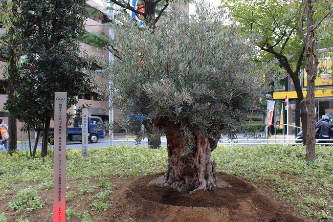 Planting Olive Tree  Celebrating the President of the IOC Mr. Thomas Bach's Receiving Honorary Docto