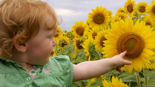 colby sunflower field 15.jpg