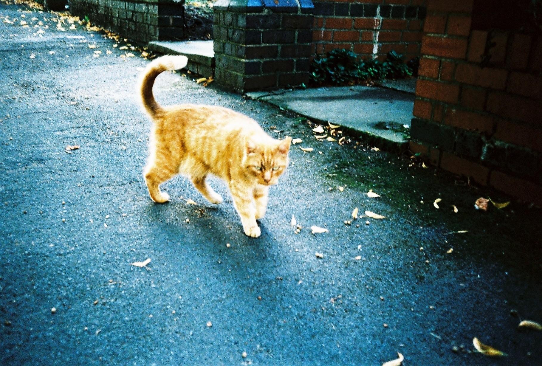 35mm Xpro Ginger Cat Pet