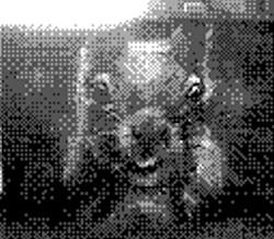 game boy camera - squirrel head