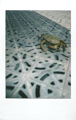 Instax Mini Crab Fishing