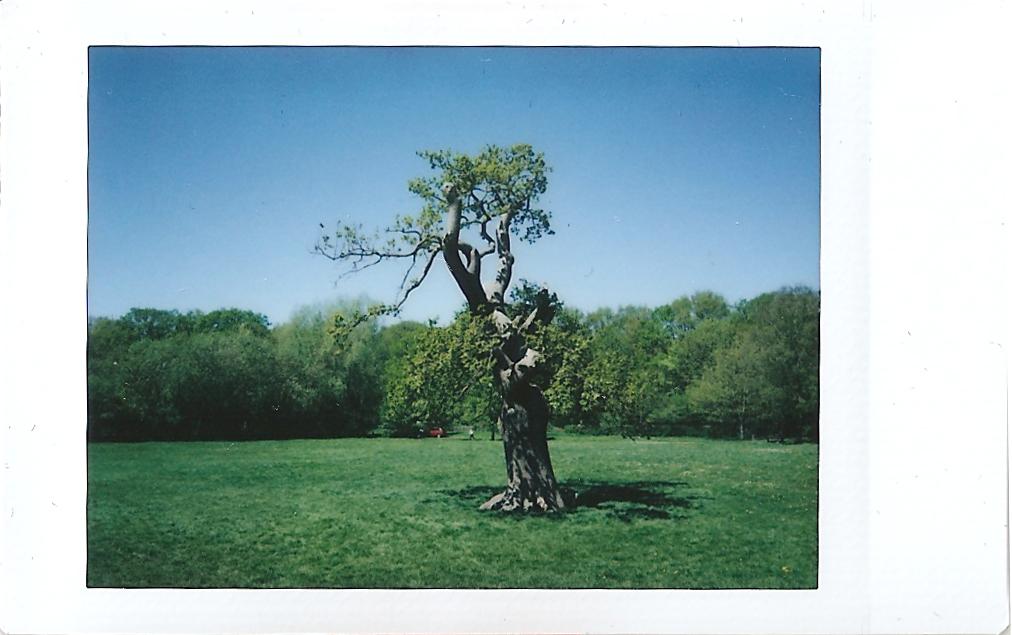 Instax Mini Coventry Strange Tree
