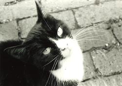 35mm Bella Stray Cat