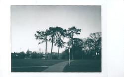 Instax Mini Monochrome Tall Trees