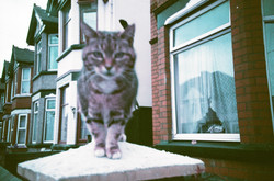 35mm Xpro Blurry Cat Pet