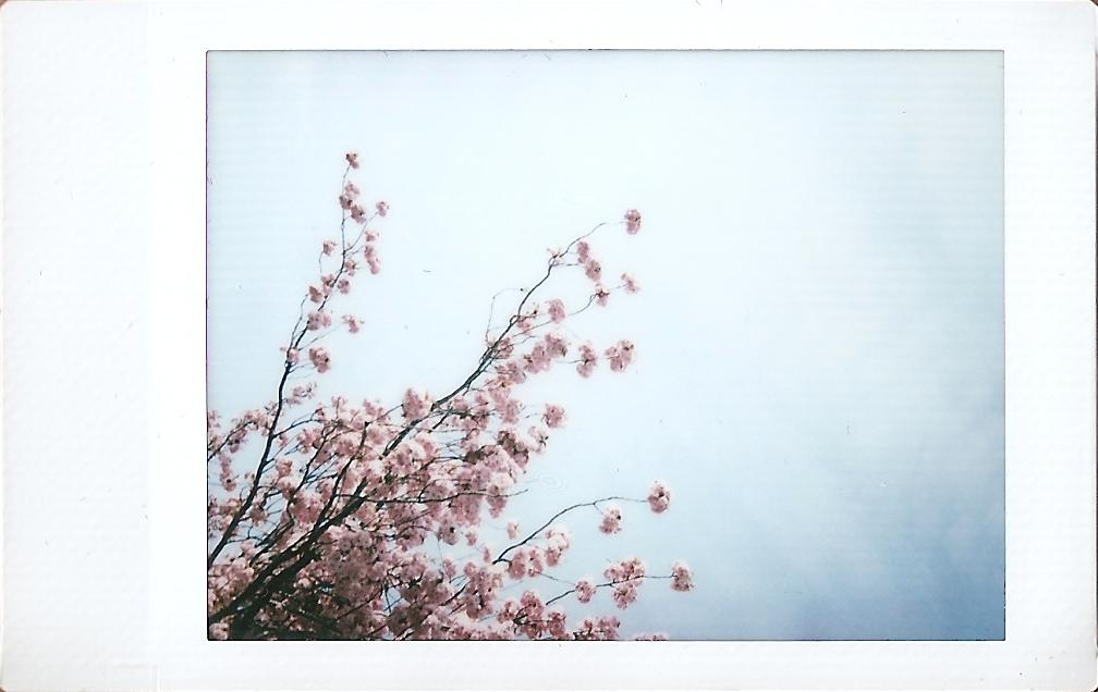 Instax Mini Pink Blossom Tree