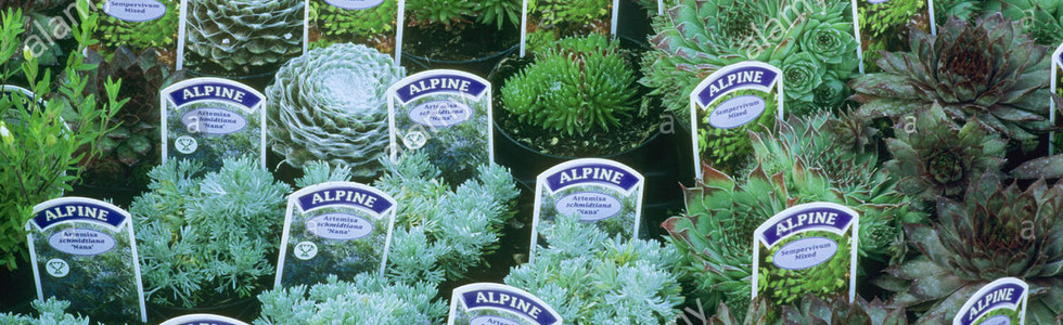 plant-sales-alpines-labels-display-garde