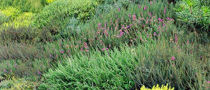 landscaping-a-slope-SIP867838-6.jpg
