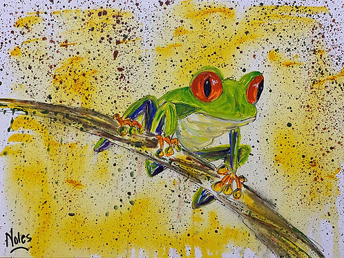 Ruby red eyed tree frog