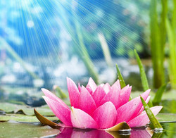 Lotus_Background.jpg 2015-2-22-19:26:25