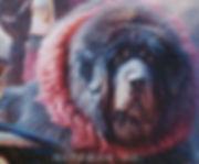 тибетский мастиф