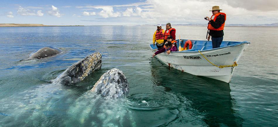 ballenas-laguna-san-ignacio-baja-california-sur