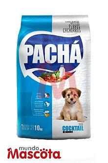Pacha cachorro puppy Mundo Mascota Moreno