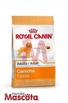 Royal Canin caniche poodle adulto Mundo Mascota Moreno