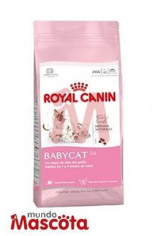 Royal Canin babycat gatito bebe Mundo Mascota Moreno