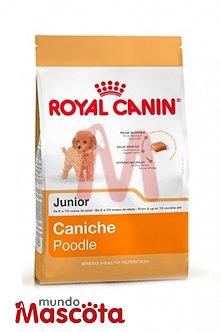 Royal Canin caniche poodle cachorro puppy junior  Mundo Mascota Moreno