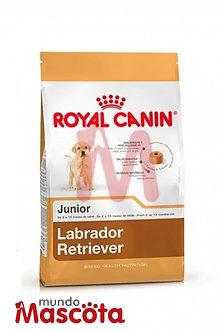 Royal Canin labrador retriever cachorro junior puppy Mundo Mascota Moreno