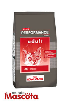 Royal Canin Performance cat gato adulto Mundo Mascota Moreno