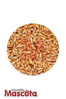 Alpiste cereales alimento Mundo Mascota Moreno