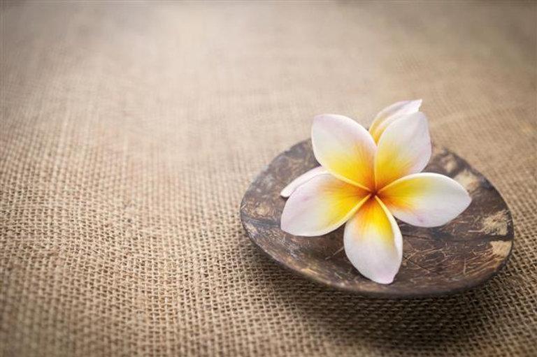 640-680526242-white-plumeria-flower-on-coconut-shell.jpeg