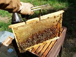 abeilles entreprise