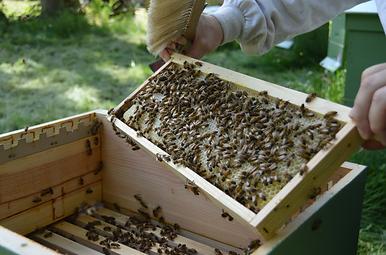 stage formation apiculture apithérapie apiculteur
