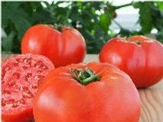 Glamour Tomato - Individual