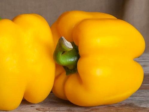 Gloria Yellow Sweet Peppers