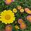 Thumbnail: Daisy