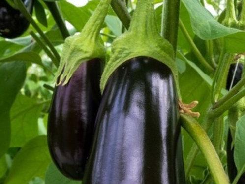 Eggplant Nadia