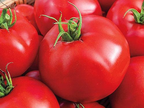 Big Beef Tomato - Individual