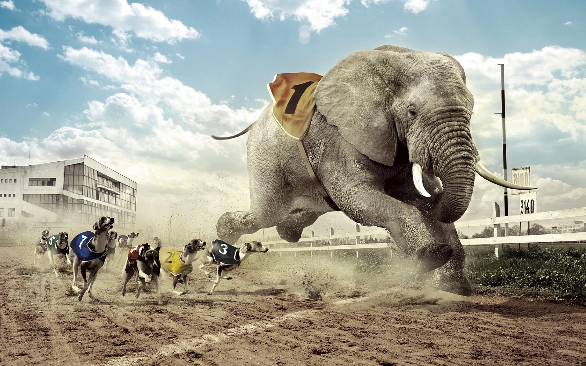 Un Elefante de Ideas para tu Marca