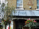 fig_tree___uxbridge__england_by_lyncohen