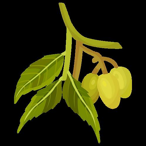 Huile de neem vierge biologique