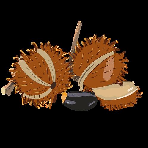 Huile de ricin vierge biologique