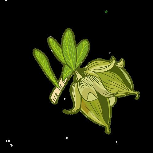 Huile de jojoba vierge biologique
