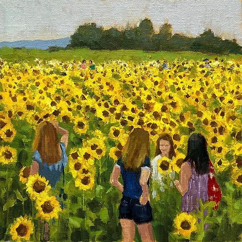 Elverson Sunflower Field
