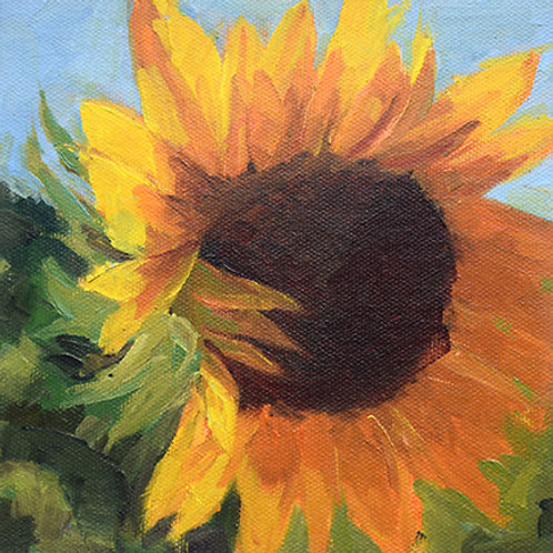 Sunflower #2 Shy