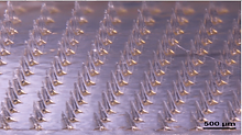Microneedle patch.png