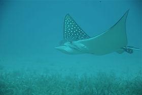 punta sur cozumel reef