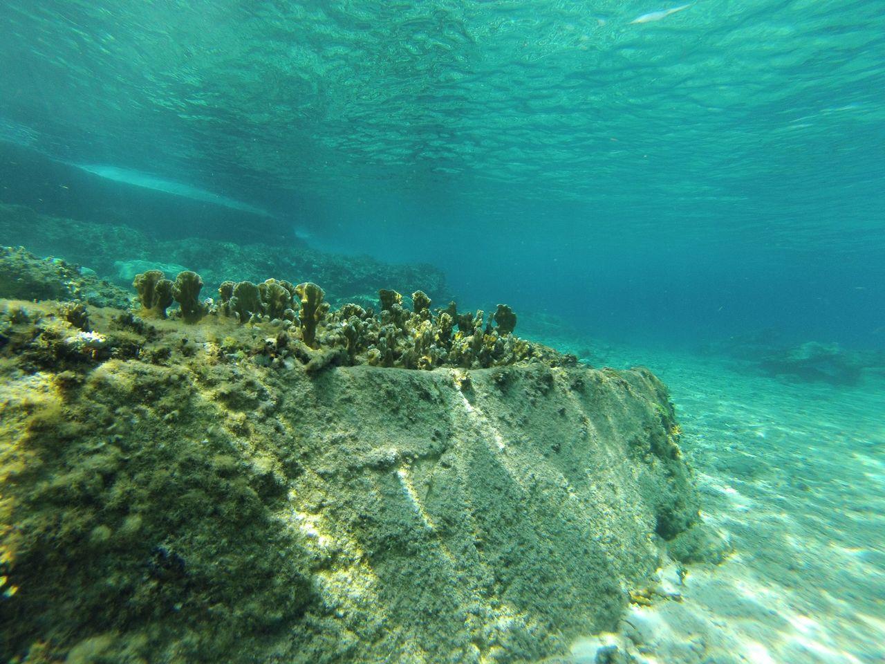 barreras-coralinas-mexicanas