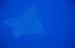 barracuda reef cozumel