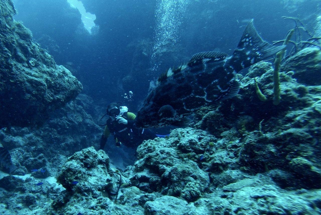 scuba-with-marine-life