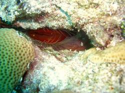 great marine life in cozumel