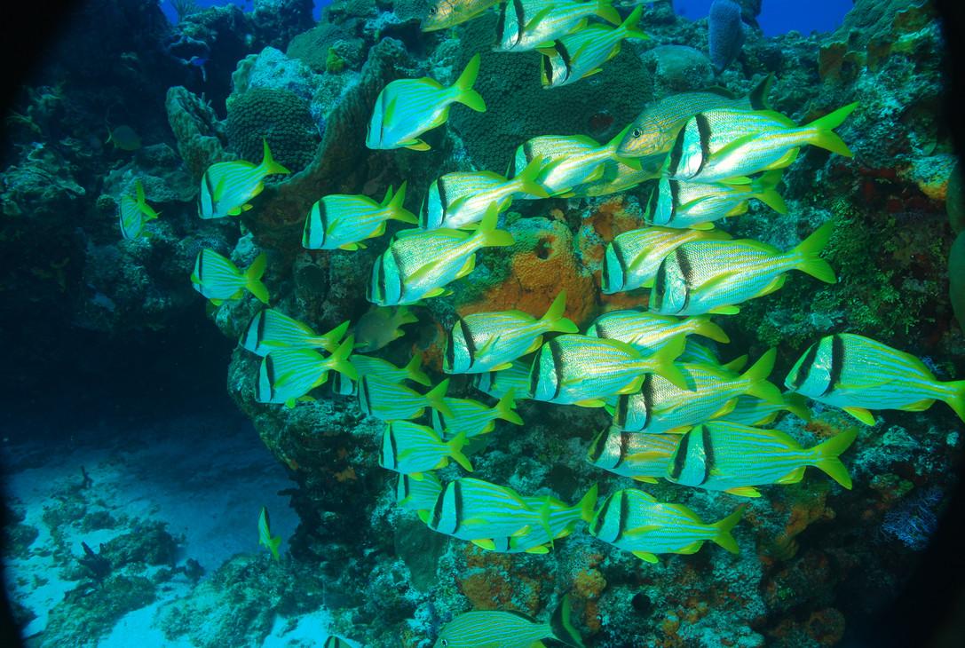 Full of colours cozumel reefs